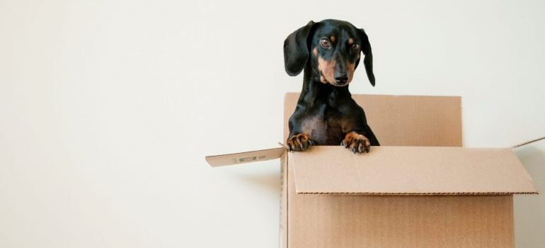 cardboard boxes the best way to pack clothes for moving